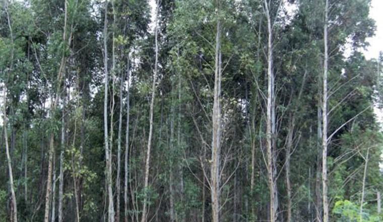 Área de reflorestamento própria